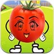 会说话的番茄